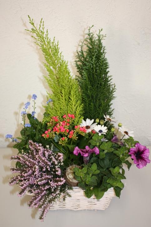 plante fleurie d exterieur elegant composition. Black Bedroom Furniture Sets. Home Design Ideas